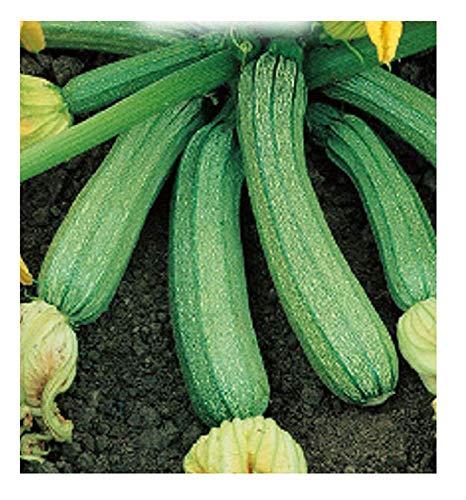 Inception Pro Infinite 65 C.ca Semi Zucchino Genovese - Cucurbita pepo - In Confezione Originale - Prodotto in Italia - Zucchine - ZI003