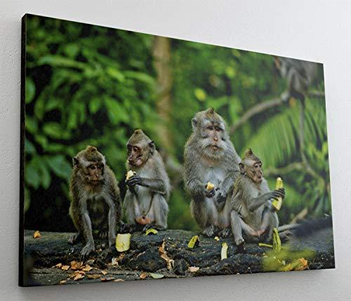 Affen Wildnis Natur Futter Leinwand Bild Wandbild Kunstdruck L1093 Größe 100 cm x 70 cm