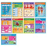 """Applied Anatomy & Physiology Posters - Set of 9 
