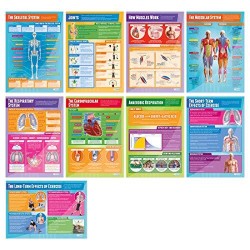Conjunto de 9 pôsteres de anatomia e fisiologia aplicados | Gráficos de educação física, Gloss Paper
