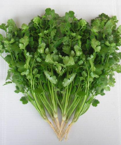 Il vous suffit de graines fines herbes???Coriandre Vert Aroma???Coriandrum Sativa???2000?Graines