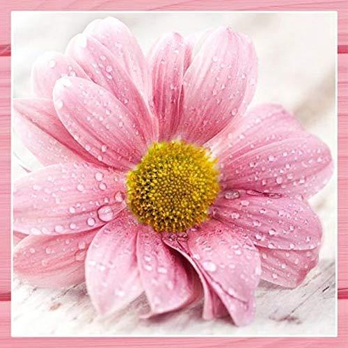 Serviettes 20 Pièce,Romance en Rose, Grand Rose Chapeau Fleur 33x33 CM