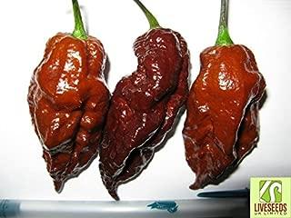 Liveseeds - HOT CHILLI PEPPER CHOCOLATE BHUT JOLOKIA 10 FINEST SEEDS