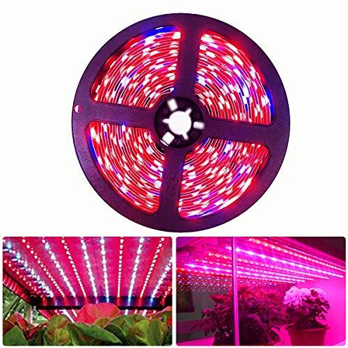 Tesfish LED planta crecer tira luz DC 12V IP20 espectro completo SMD 5050 rojo azul 4:1 cuerda luz para acuario Invernadero plantas