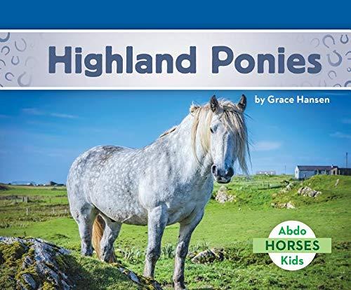 Highland Ponies (Horses)