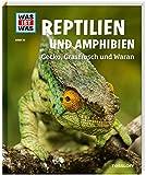 20 Reptilien und Amphibien. Gecko, Grasfrosch und Waran
