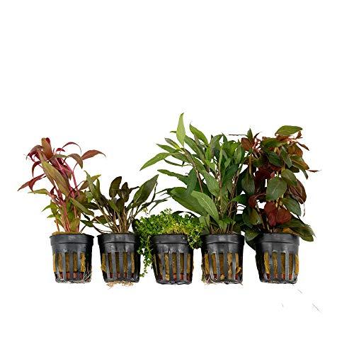 5x Wasserpflanzen Aquarium
