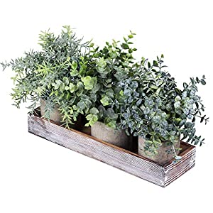 Set of 3 Mini Potted Artificial Eucalyptus Plants Faux Rosemary Plant Assortment with Wood Planter Box for Indoor Office Desk Apartment Wedding Tabletop Greenery Decorations 8.7″ Tall