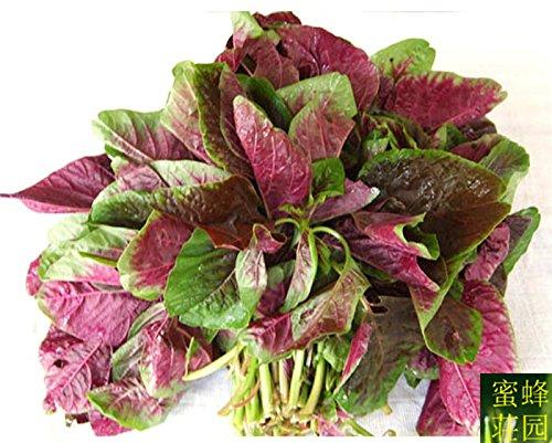 graines de amarante rouge chaud amarante vert légumes nuage rouge 500seeds de graines de coriandre