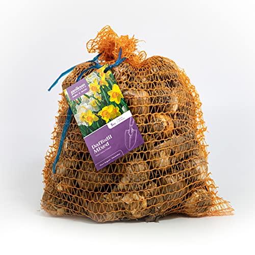 Jamieson Brothers® Mixed Daffodil Bulbs 5kg Bag