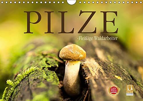 Pilze - fleißige Waldarbeiter (Wandkalender 2019 DIN A4 quer): Sie heißen Satan, Schweinsohr, Fliegen oder Knollenblätter: Pilze. (Monatskalender, 14 Seiten ) (CALVENDO Natur)