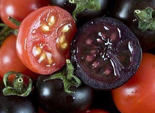 25 Indigo Rose, sélectionné à la main, graines de tomate haut de gamme, l'agriculture biologique