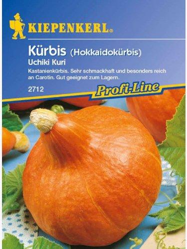 Kiepenkerl Kürbis Uchiki Kuri