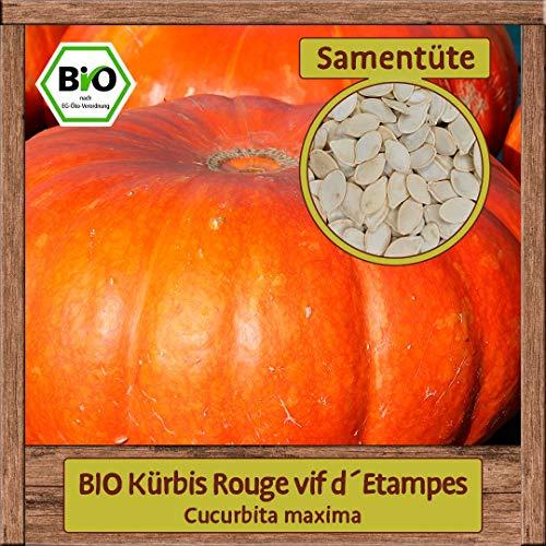 Samenliebe BIO Kürbis Rouge vif d´Etampes Cucurbita maxima Saatgut samenfest in BIO Qualität ÖKO-DE-007 reicht für ca. 7 Pflanzen