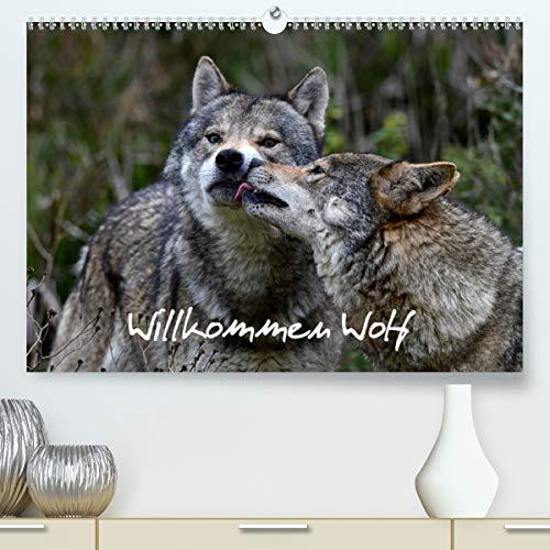 Willkommen Wolf (Premium, hochwertiger DIN A2 Wandkalender 2021, Kunstdruck in Hochglanz)
