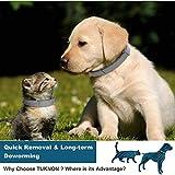 IMG-2 collare antipulci gatto cane e