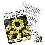 Farbenfrohe Sonnenblumen Samen mit hoher Keimrate - Blumensamen für einen bunten & bienenfreundlichen Garten (1x Limonengelb)