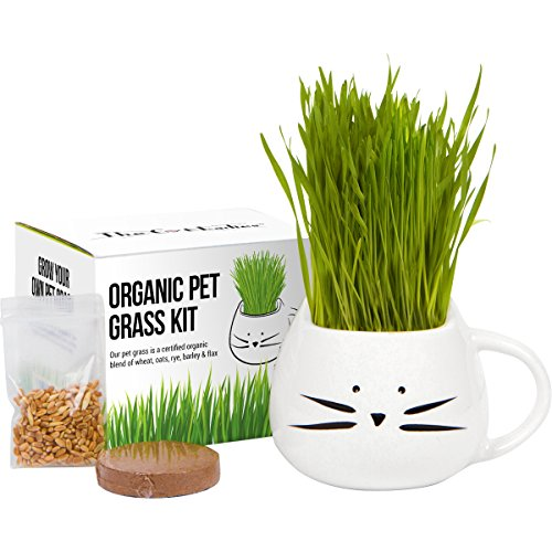 The Cat Ladies Organic Cat Grass Growing Kit
