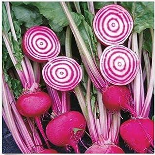 Chioggia Remolacha Fresh 60 Seeds Semillas Candystripe Toro Ojos Suave Bassano