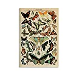JTYK Poster, Motiv: Schmetterlinge, Vintage-Stil,