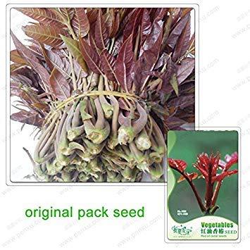 50 graines/Pack, graines de cèdre huile rouge, marqué Toon, graines de légumes en pot, bonsaïs plante verte