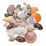 LIOOBO 35Pack Estilo mediterráneo Playa de mar Conchas Marinas Conchas Marinas Conchas Naturales artesanías Acuario Acuario decoración
