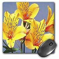 3drose 8x 8x 0.25インチマウスパッドオレンジNイエローTiger Lillies (MP 59776_ 1)