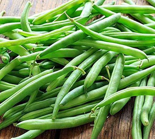 Blue Lake Bush Green Bean Seeds, 50+ Premium Heirloom Seeds, Fantastic Addition to Home Garden!, (Isla's Garden Seeds), Non GMO, 90% Germination Rates, Highest Quality Seeds