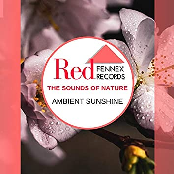 The Sounds Of Nature - Ambient Sunshine