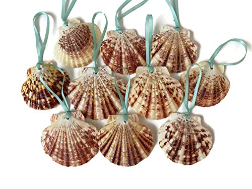 Glitter Seashell Beach Christmas Ornaments with Turquoise Ribbon, 10