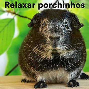 Relaxar Porchinhos