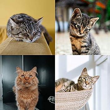 器楽-かわいい猫