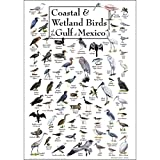 Earth Sky + Water - Coastal & Wetland Birds of The Gulf of Mexico - Poster