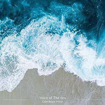 Calm Beach Waves