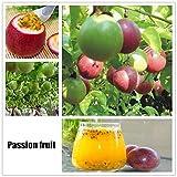 swiftt 40 Stücke Obstsamen Passionsfrucht Samen Mini Bonsai Hausgarten Obst Bäume Outdoor Obst Samen für Garten Pflanzen