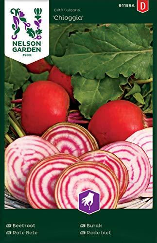 Rote Beete Samen Chioggia - Nelson Garden Gemüsesamen - Samen für Rote Beete (200 Stück) (Einzelpackung)