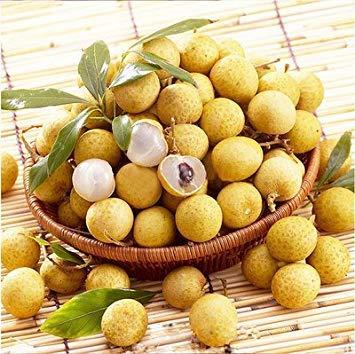 Vistaric 10pcs / Sac Exotique Longan Graines Héritage Bio Succulent Oeil Bonsaï en Pot Fruitier Plante pour Mini Jardin Facile à Cultiver