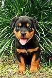 Pintura digital por número para adultos, color negro, Rottweiler, mascotas, animales, manualidades, para decoración de pared del hogar, 40 x 50 cm