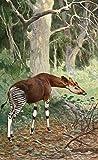 The Poster Corp R. Friese – Tierleben 1920 Okapi