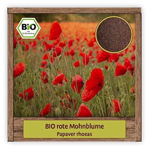 BIO Mohnblumen Samen Klatschmohn Sommerblume mit großen rot leuchtenden Blüten Wildblumensamen für Bienenweide