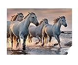 Herzl-Manufaktur Poster Pferde am Strand 30x 40cm