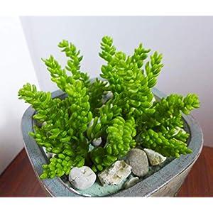 Bright Sun Beautiful 4 x 7 Stems yacon Artificial Grass unkillable Succulents Plants Landscape #Quas