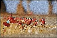 HDデナリ国立公園 アラスカ-秋の野原を歩くグリズリーベア9025834(52*38CMプレミアム500ピース アメリカ製!) 0110pintu-144103Z0E5V (Color : Photo 6)