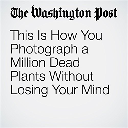 This Is How You Photograph a Million Dead Plants Without Losing Your Mind copertina