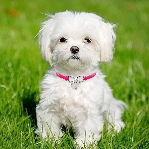 QWERGLL Hundehalsband Süße Katze Hundehalsband Welpe Halskette Kleine Hunde Katzen Halsbänder Haustier Accessoires Mit Herz Anhänger Für Kätzchen