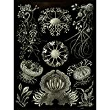 Bumblebeaver Nature Art ERNST Haeckel Plankton SEA Biology