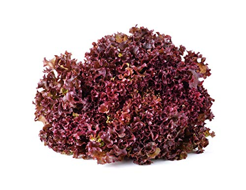 Salad Bowl Red Leaf Lettuce Seeds, 1000+ Premium Heirloom Seeds, Delicious! Add Color to Your Salad!, (Isla's Garden Seeds) 90% Germination Rates, Non GMO, Highest Quality!