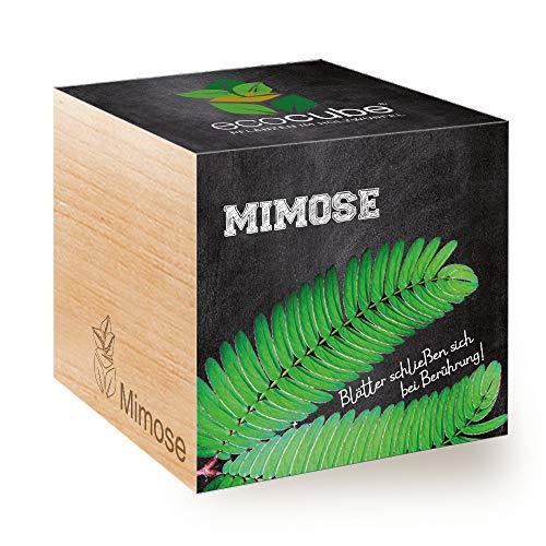 Feel Green Ecocube Mimose, bladeren sluiten zich bij aanraking, duurzaam cadeau-idee (100% milieuvriendelijk), grow your own/kweekset, planten in houten kubus, made in Oostenrijk