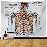 Tapestry C4 Levator Scapula Vertebra Scapulae Muscle Didactic Body Board Thoracic Anatomy Science Education Wall Tapestry Beach Tapestry for Bedroom Dorm 80x60 Inch