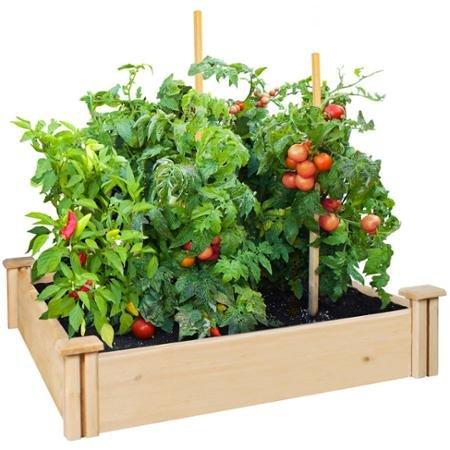 Greenes Fence 42' x 42' x 5.5' Cedar Raised Garden Bed